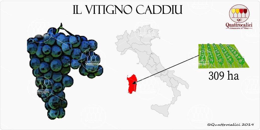 caddiu vitigno