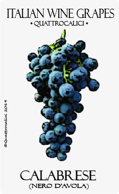 calabrese-nero d'avola vitigno