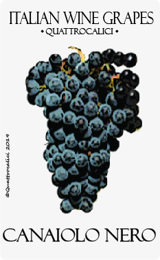 canaiolo nero vitigno
