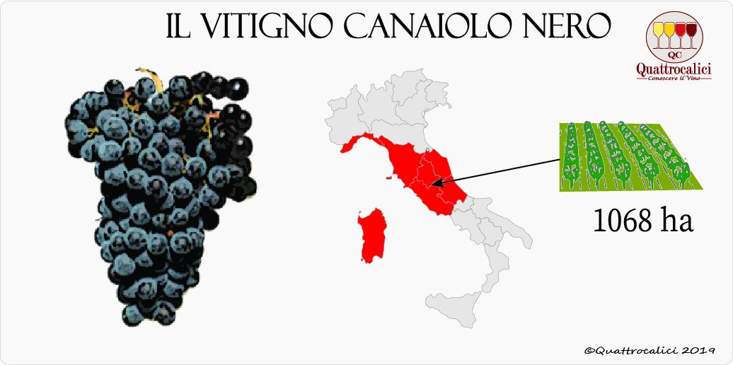 vitigno canaiolo nero