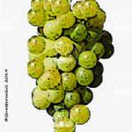 capolongo vitigno