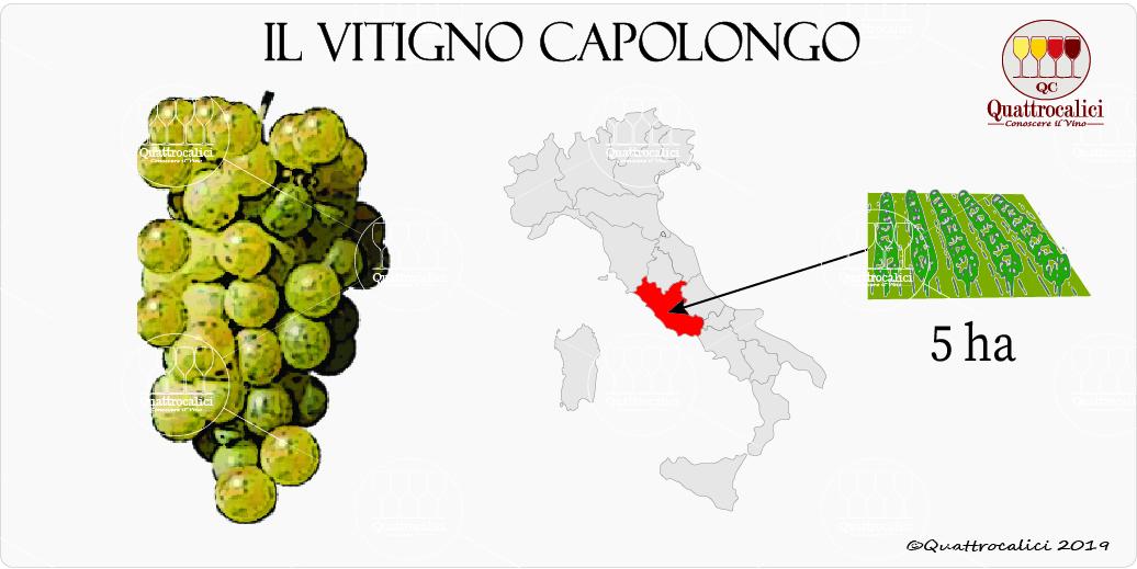 vitigno capolongo