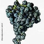 caricagiola vitigno