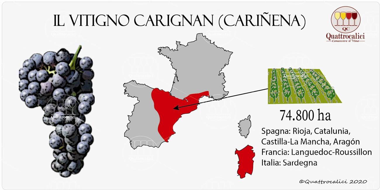 vitigno carignan