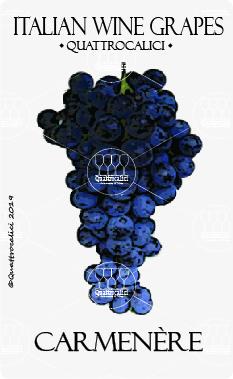 carmenere vitigno