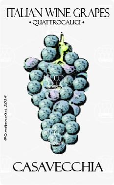 casavecchia vitigno