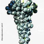 casetta vitigno
