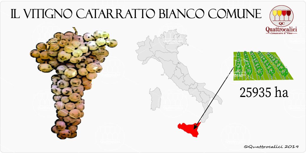 vitigno catarratto bianco comune