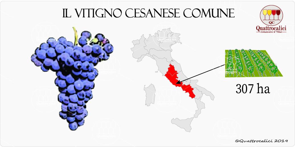 vitigno cesanese comune