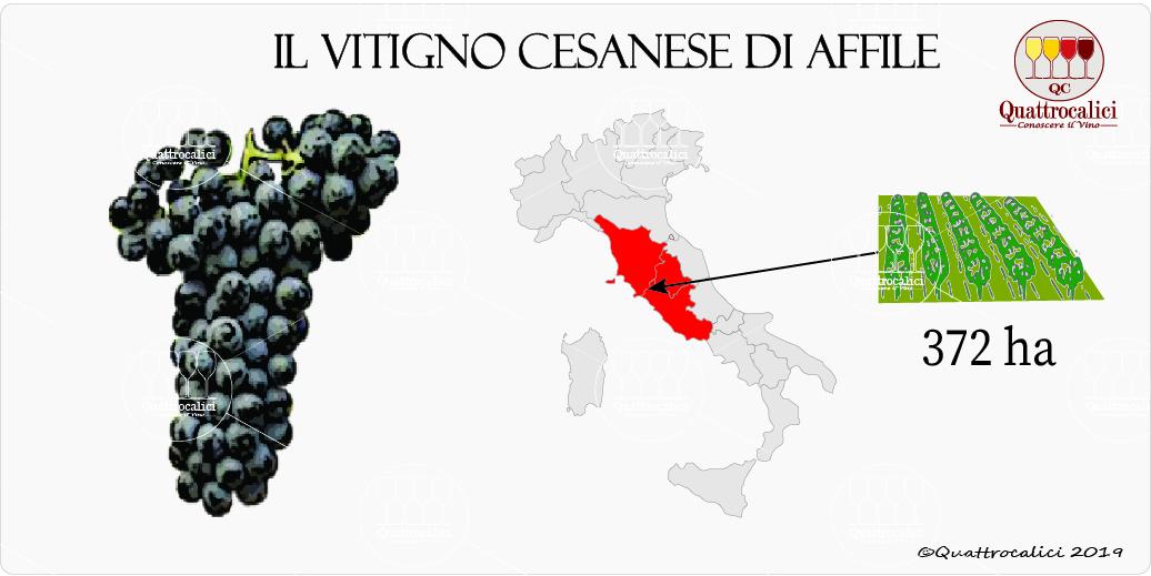 vitigno cesanese di affile