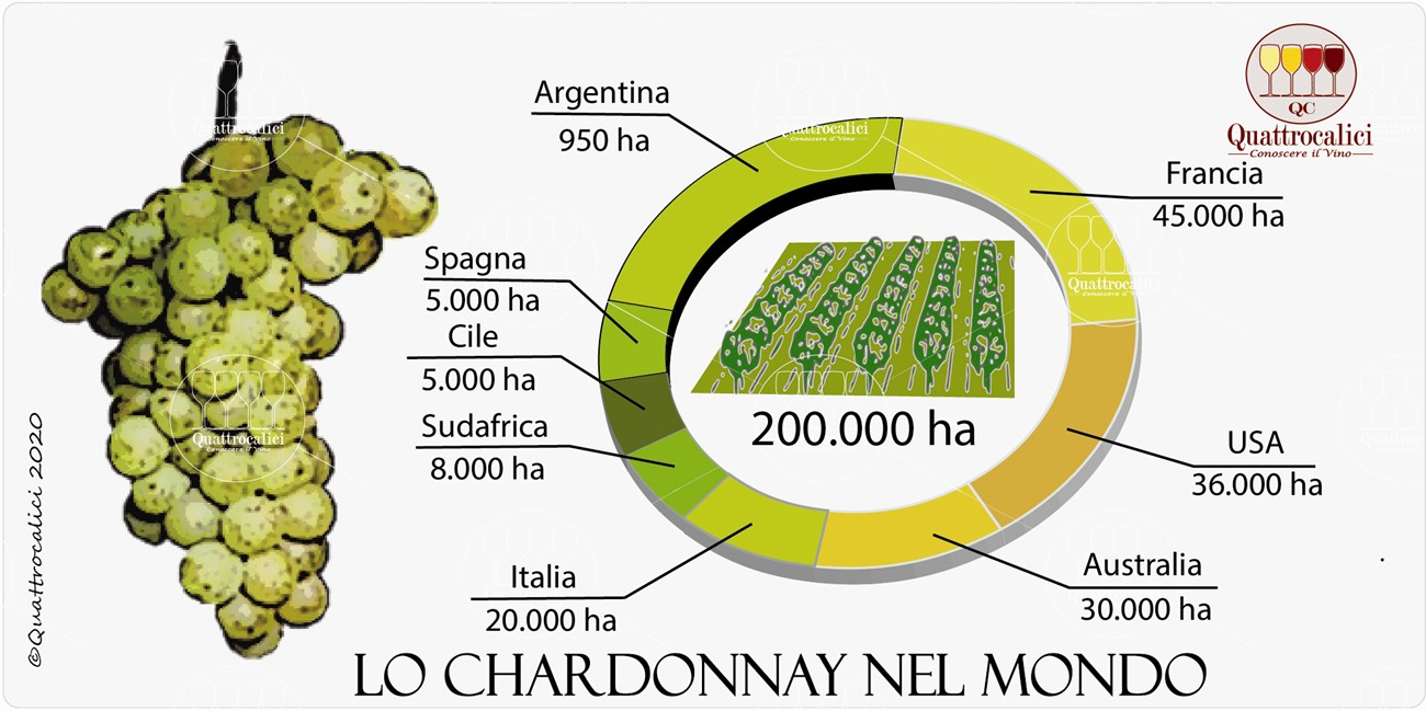 chardonnay nel mondo