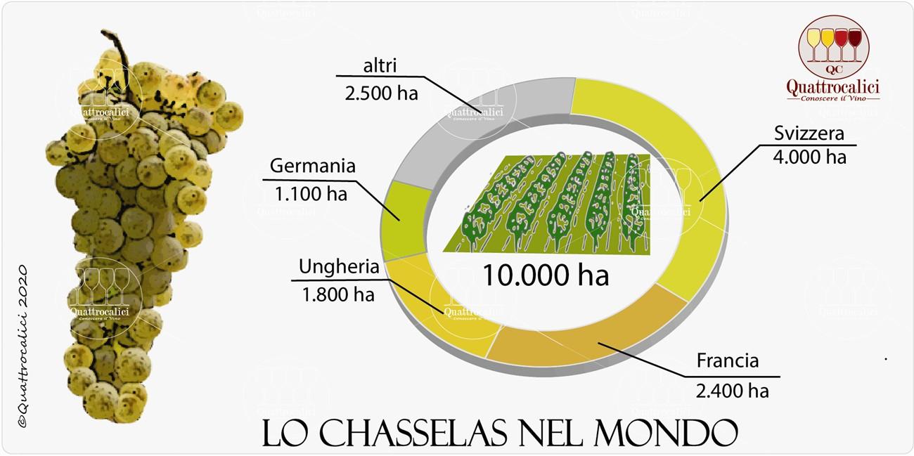 vitigno chasselas