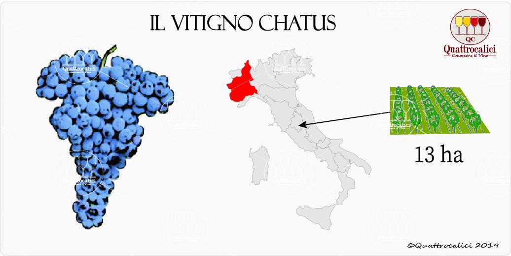 vitigno chatus