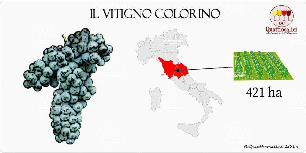 vitigno colorino