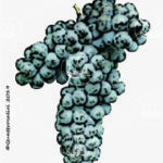 colorino vitigno