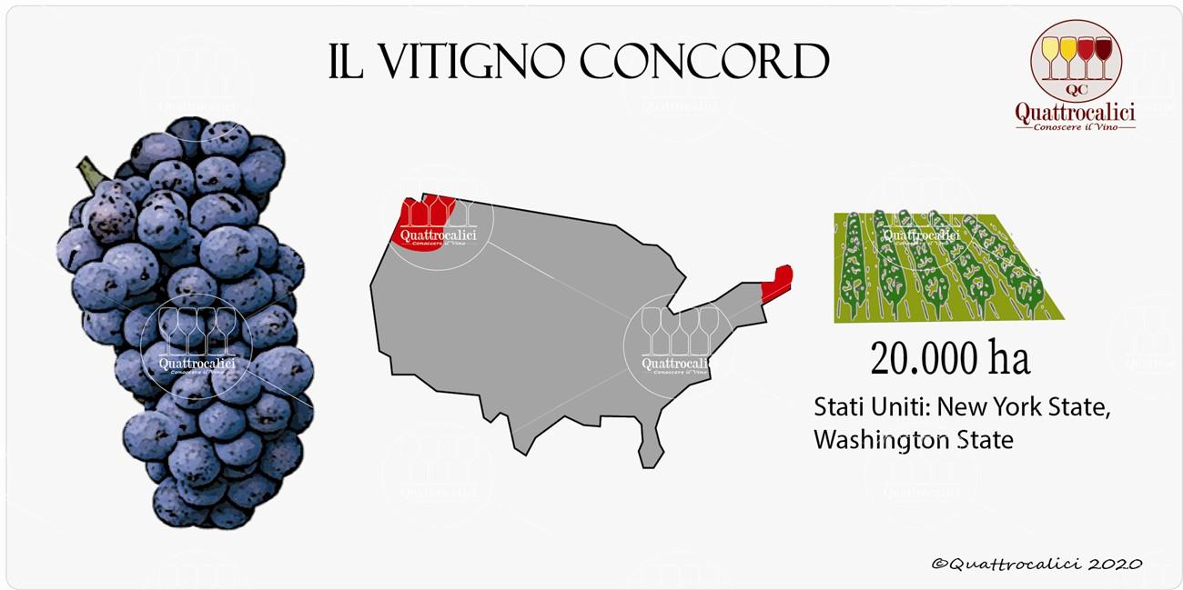 vitigno concord