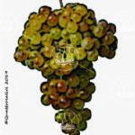 cortese vitigno