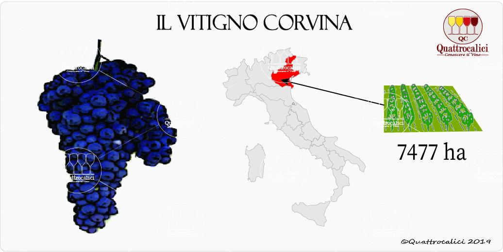 vitigno corvina