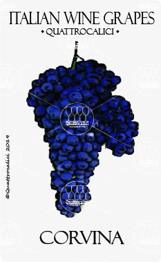corvina vitigno