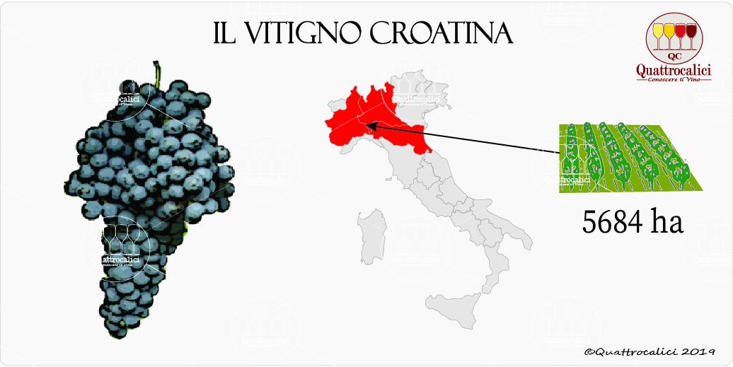 vitigno croatina