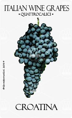 croatina vitigno