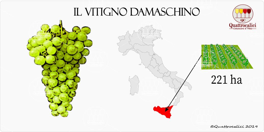 vitigno damaschino