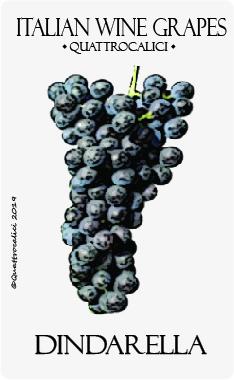 dindarella vitigno