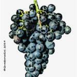 doux d'henry vitigno