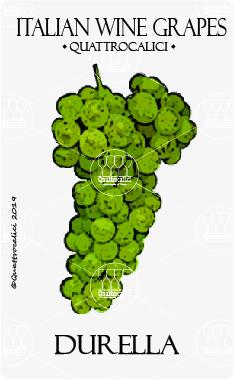 durella vitigno