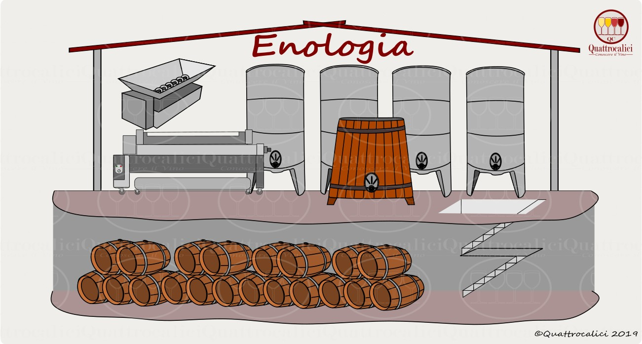 L'Enologia e il vino