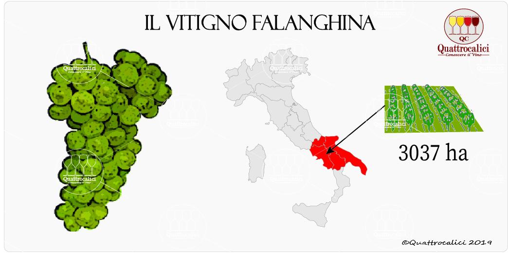 vitigno falanghina