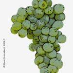fenile vitigno