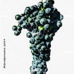 fogarina vitigno