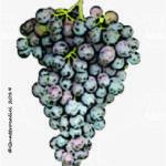 fortana vitigno