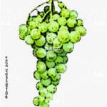 francavidda vitigno