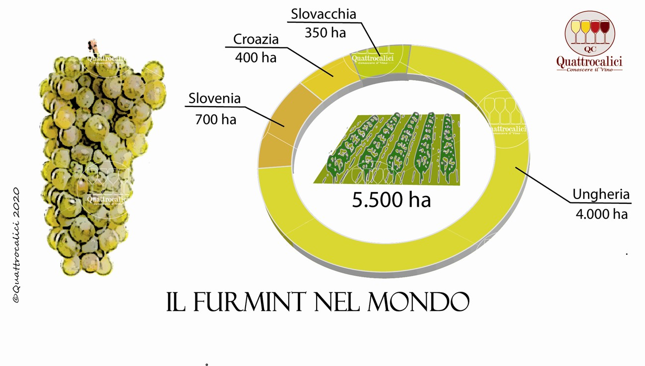 vitigno furmint