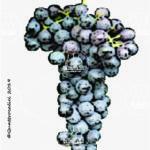 gamaret vitigno