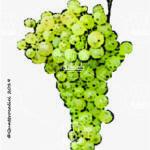 glera vitigno