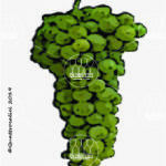 grechetto vitigno