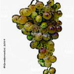 greco vitigno