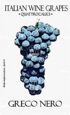 greco nero vitigno