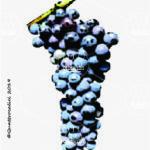 groppello di revò vitigno