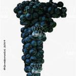 groppello di santo stefano vitigno