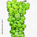 impigno vitigno