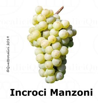 Incroci Manzoni - Famiglia di Vitigni