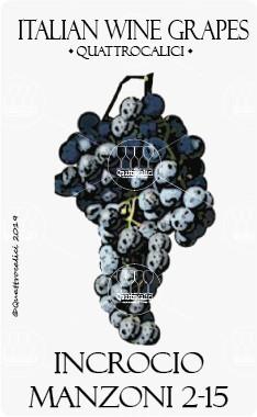 incrocio manzoni 2-15 vitigno