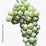 kerner vitigno