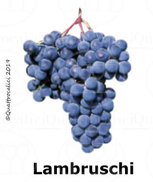 Lambruschi - Famiglia di Vitigni