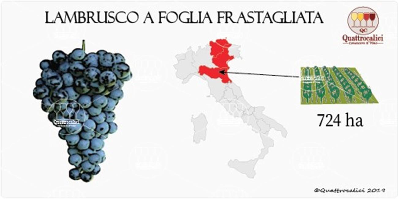 vitigno Lambrusco a foglia frastagliata