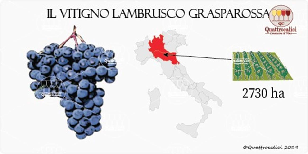 vitigno lambrusco grasparossa